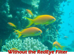 Photo captured without using Fantasea Line's RedEye filter. Photo provided by H.R. Fantasea Photo and Marketing Ltd.