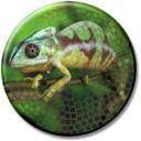 zonic_chameleon.jpg