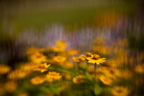 Slot Aperture :: Flower by Troy Eiffert. Image copyright © 2010, Troy Eiffert, and provided by Lensbaby Inc. Used by permission.