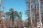 Click to see SD1PINE_SPPu200r03.JPG