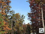 Click to see S110PINE-DPP-3.JPG