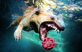 Love Those Underwater Dogs Photos This Video Shows How
