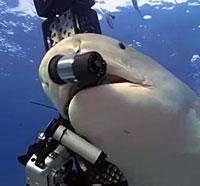 Shark-camera-logo
