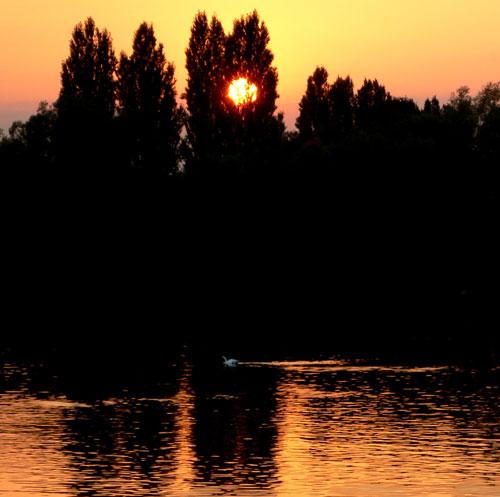 Story-telling-sunset-swan-3