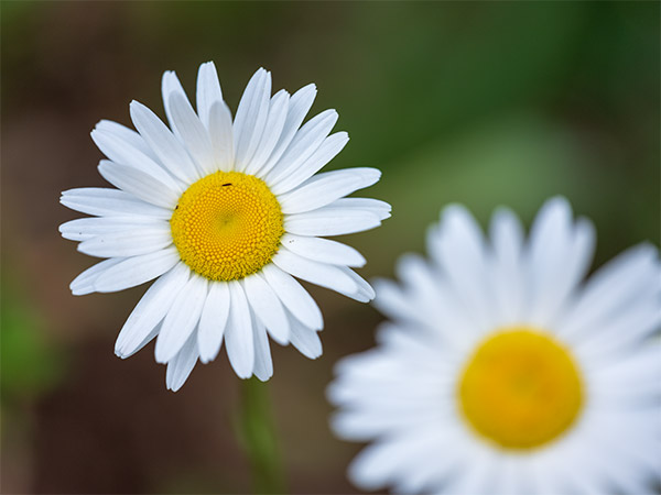 Fujinon GF 120mm f/4 R LM OIS WR Macro Review: Field Test -- Gallery Image