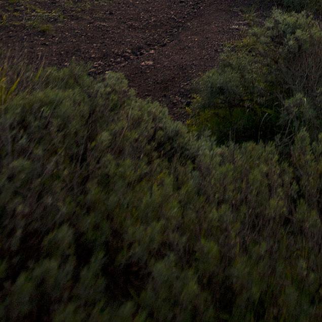 Laowa 12mm f/2.8 Field Test