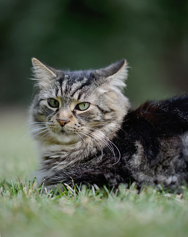 Nikon 105mm f/1.4 Review - sample portrait image